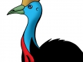 cassowary coloured copy